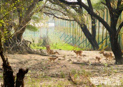 Bhadra-Wild-Life-Sactunary