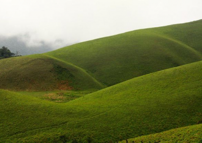 Grass-Hills