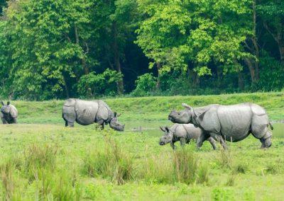 Kaziranga-&-National-Park
