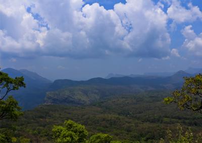 Tiger-Valley